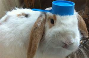 Cuteness Overload: Bunnies With Hats Gallery (20 Photos