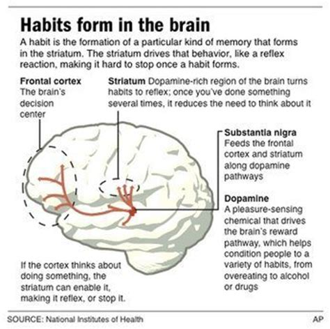 How Habits Are Formed In The Brain by Habits Living Organisational Culture Grey Sphere