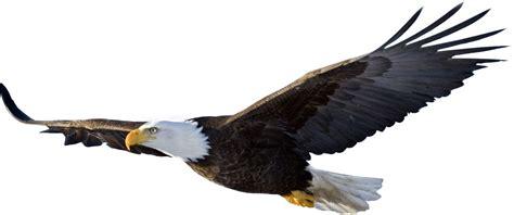 Bald Eagle Clip Eagle Png Clipart Best