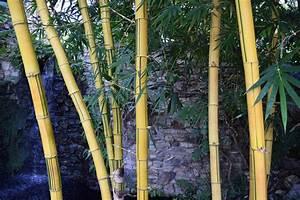 Gros Bambou Deco : gros bambou deco exterieur interesting deco jardin avec bambou les meilleures ides de la with ~ Teatrodelosmanantiales.com Idées de Décoration