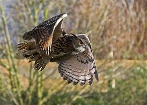 The Secrets of Silent Flight: What Owl Feathers Can Teach ...