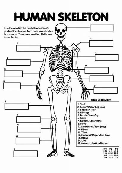 Human Coloring Science Systems Anatomy Unit Bones