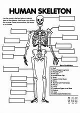 Human Coloring Science Momjunction Unit Systems Teaching Bones Anatomy Activities sketch template