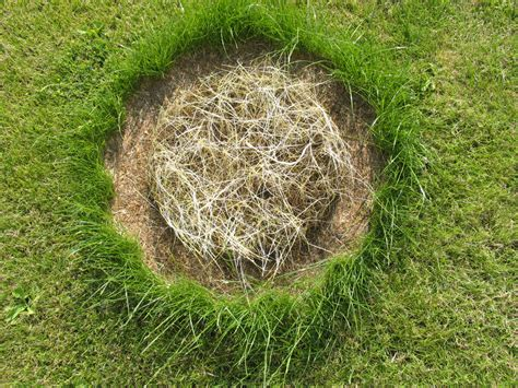 lawn reseeding patches repairing care