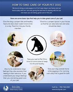 how to take care of your pet dog visually With caring for your dog