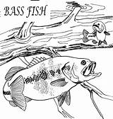 Coloring Fish Bass Hungry Fishing Channel Case Again Bar Looking Don Button Through sketch template