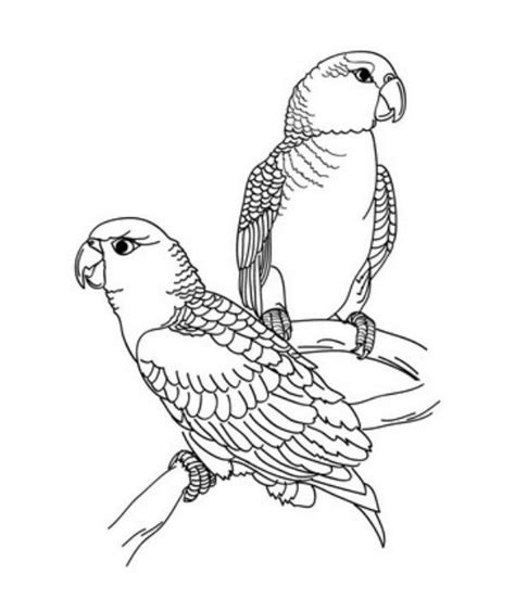 adult coloring pages beautiful parrot coloring pages for