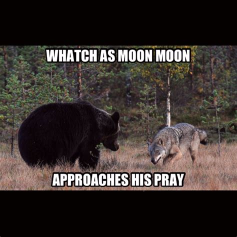 Moon Moon Meme - moon moon s pray moon moon know your meme