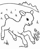 Lamb Sheep Coloring Running Outline Pages Drawing Aroung Meadow Sheet Template Getdrawings Sheeps Called Templates Coloringsky sketch template