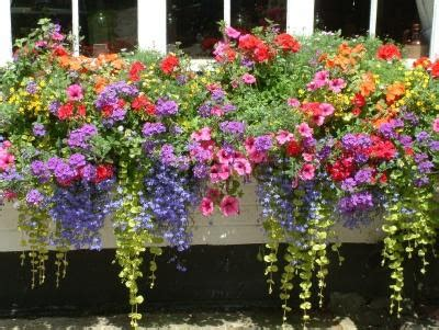 cascading flowers for window boxes ode to secret skye i need flowers