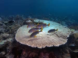 Hard Coral Identification