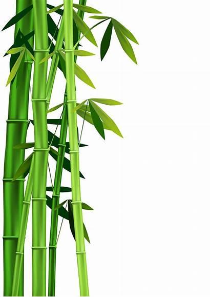 Bamboo Clipart Background Clip Border Vector Borders