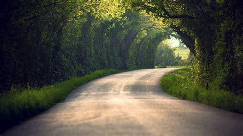 landscape road trees wallpapers hd desktop  mobile