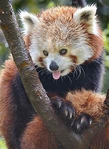 55, Pictures, Of, Animals, Showing, Their, Tongue