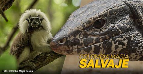 especies en  de extincion colombia magia salvaje kienyke