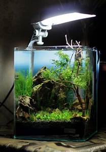Die Besten Aquarien : die besten 25 aquarium dekor ideen auf pinterest ~ Lizthompson.info Haus und Dekorationen