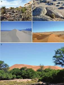 Examples Of Desert Habitats  Highlighting Structural Diversity  A