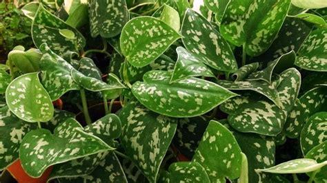 plante verte interieur sans lumiere plantes vertes d int 233 rieur la nature dans notre quotidien