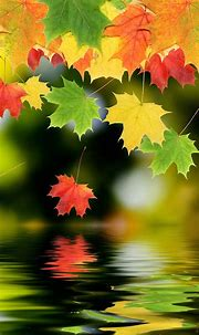 Maple Leaf Android Wallpapers 1080p Phone Mobile Full ...