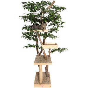 cat tree sycamore real cat tree nipandbones