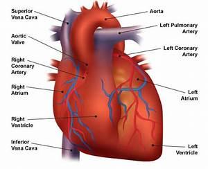 Congestive Heart Failure  The Essence Of Heart Failure