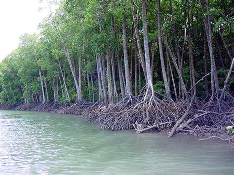 Mangrove   ferrebeekeeper