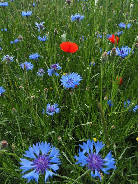 Wildblumen Im Garten by Wildblumen Im Garten Bilder Wohn Design