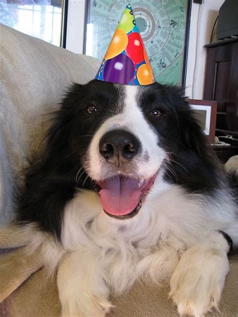 Things That Make Border Collies Happy