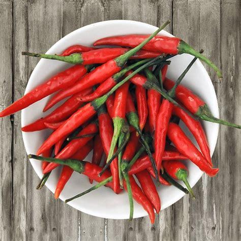 hot organic red thai hot chili pepper capsicum annuum