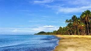 Bilder Meer Strand : bilder palmenstrand karibik ~ Eleganceandgraceweddings.com Haus und Dekorationen