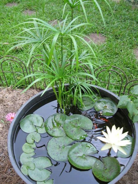 comment mettre bebe au pot les 25 meilleures id 233 es concernant plantes en pot sur patio de plantes en pots