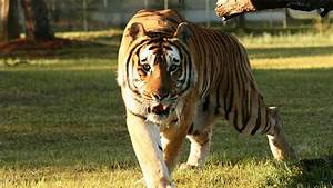 Big Cat Rescue - Making a Difference! - YouTube