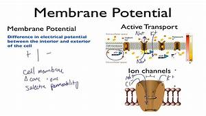 Membrane Potential - Khan Academy Mcat Video Competition