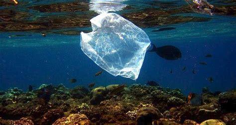 Plastika në det, Shqipëria në rrezik! - WWF jep alarmin ...