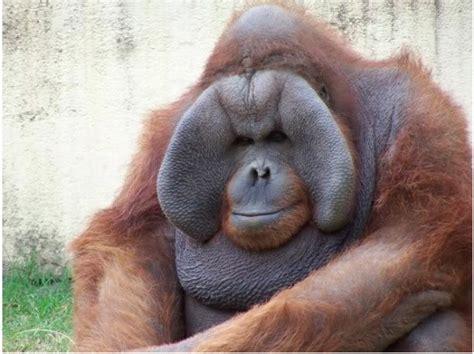 Ugliest Animals In World