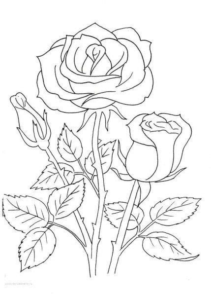 Новости | Coloring pages, Flower coloring pages, Color tattoo