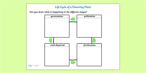 pollination fertilization seed dispersal