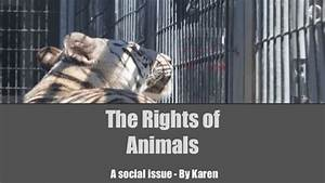 Animal Rights Social Issue By Karen