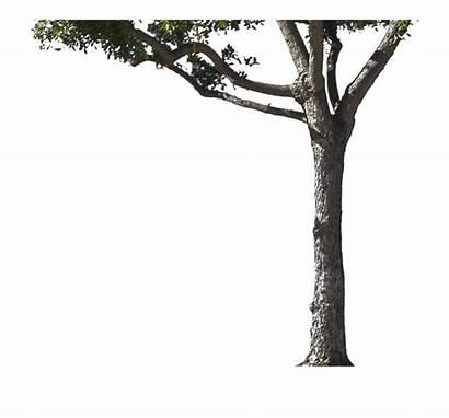 Tree Trunk Transparent Vippng Broken Pngmart Kb