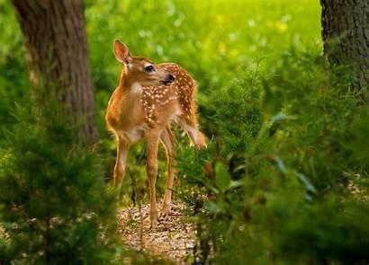 Nature Animals Desktop Wallpapers Deer Mammals Animal