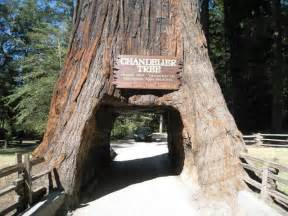 chandelier drive through tree travel california