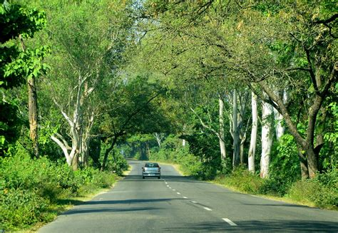 fileroads  india dehradun uttarakhand trees