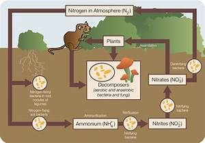 Directed Network  U2013 Nitrogen Cycle   Networks Course Blog