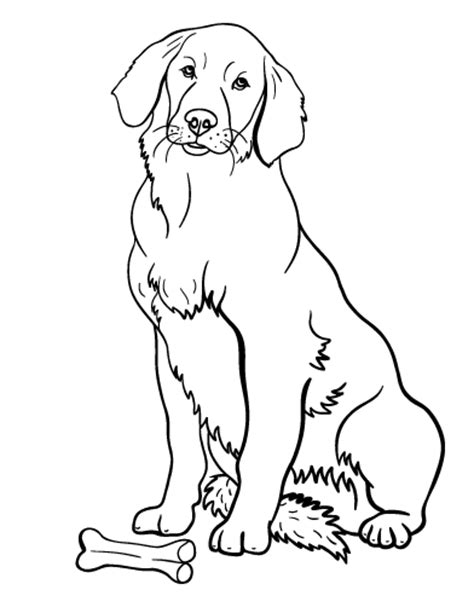 printable golden retriever coloring page