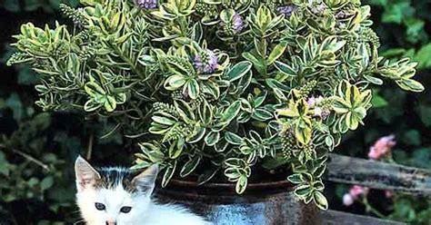 herbst pflanzen und deko fuer balkon und terrasse mein