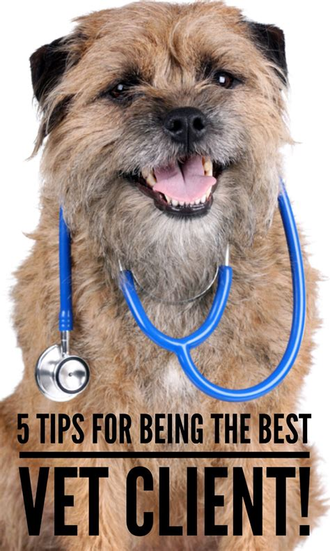 Who has the best pet insurance? Are you and your pet on your best behavior at the vet's office? We have 5 rules that will make ...