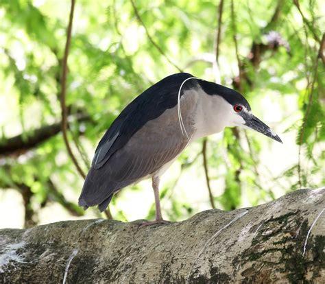 รูปภาพ : ปีก, สัตว์ป่า, ปาก, สัตว์มีกระดูกสันหลัง, นกกระสา ...