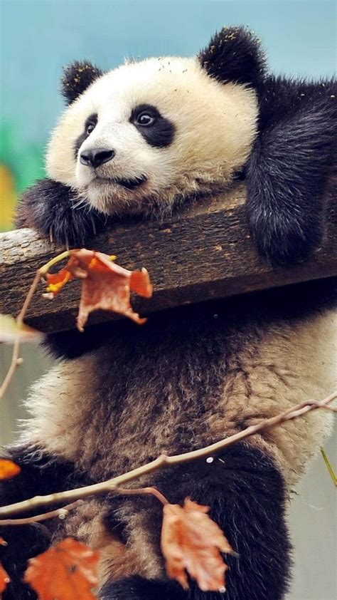 animal wallpaper  iphone images  pinterest