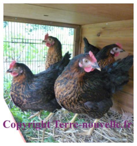 survivalisme familial nos quatre premi 232 res poules