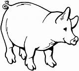 Pig Pot Coloring Pages Bellied Animals Template sketch template